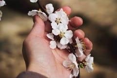 Blomstra filialen i hennes hand royaltyfri fotografi