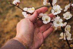 Blomstra filialen i hennes hand arkivfoto