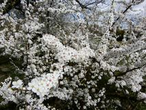 blomstra fjädertrees arkivfoto
