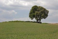 Blomstra hästkastanjen, (Aesculushippocastanumen) med fältet i Maj, dåliga Iburg, Osnabrueck land, lägre Sachsen, Tyskland Royaltyfri Bild