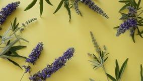 Blomstra lösa blommor på gul bakgrund lager videofilmer