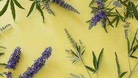 Blomstra lösa blommor på gul bakgrund arkivfilmer