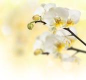 Blomstra orchids för filial Arkivfoton