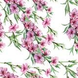 Blomstra persikan, vattenfärg Arkivfoto