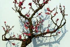blomstra plommon 3 Fotografering för Bildbyråer
