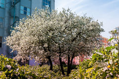 Blomstra trädet Arkivfoton