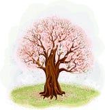 Blomstra trädet Arkivfoto