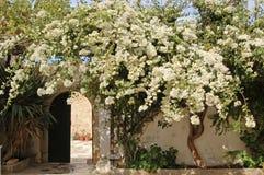 Blomstra trädet i borggården av en kloster royaltyfria bilder