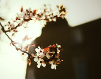 Blomstra trädet i gatan Arkivfoton