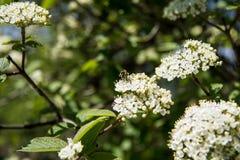 Blomstra trädfilialen i skogen royaltyfri fotografi