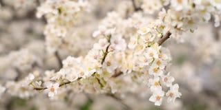 Blomstra trädfilialer Royaltyfria Bilder