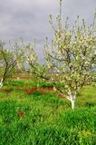 blomstra trädgård Fotografering för Bildbyråer