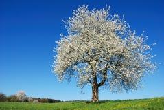 blomstra tree royaltyfri bild