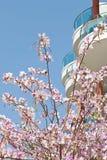 blomstra tree Royaltyfri Fotografi