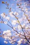 blomstra tree Royaltyfria Foton