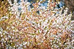 Blomstra tree Arkivbild