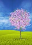 blomstra tree för äpple Arkivfoto