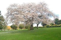 Blomstra trees Royaltyfri Fotografi