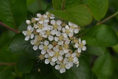Blomstra vita blommor Arkivfoton