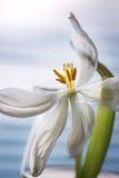 blomstrad blomma Arkivfoton