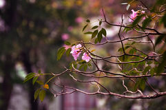 Blomstrade blommor Royaltyfri Foto