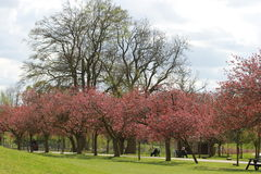 Blomstrade träd Arkivfoto