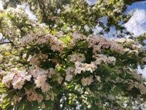 Blomstrade tr?d arkivfoton
