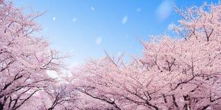 blomstrar Cherryet arkivfoto