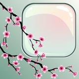 blomstrar Cherryet Arkivbilder