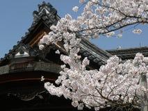 blomstrar Cherryet kyoto Arkivfoto