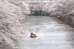 blomstrar Cherryet tokyo arkivfoto