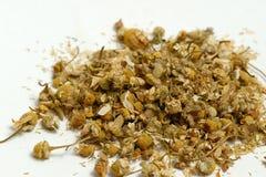 blomstrar den torkade chamomilen arkivfoto