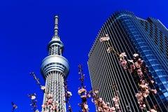 blomstrar för det tokyo för den Cherryjapan skyen treen tornet Arkivfoton