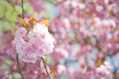 blomstrar springtime Arkivfoto
