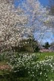 blomstrar springtime Fotografering för Bildbyråer