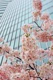 blomstrar stads- Fotografering för Bildbyråer
