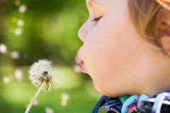 Blond baby girl blows on a dandelion flower Royalty Free Stock Photography