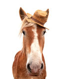 Blond Belgian draft horse wearing a straw hat. Looking at the viewer head on, isolated on white royalty free stock photography