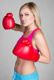 Blond Boxer Royalty Free Stock Images