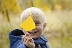 Blond boy holds a yellow leaf in front of him. Portrait.  stock photo
