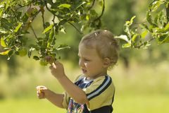 Blond boy in the orchard Stock Images