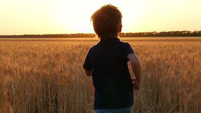 A blond boy runs among the ears of wheat to meet the sunset. A child runs through a field of ripe wheat. The camera