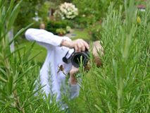 A blond boy with a white shirt tries to photograph a cross spider in a rosemary shrub in the garden. A blond boy photographs a cross spider in the herb garden Stock Photo