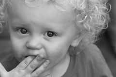 Blond curly haired toddler boy Stock Image