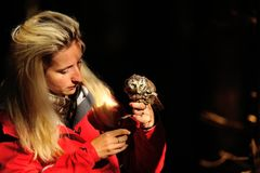 Blond falconry lady with Boreal Owl Royalty Free Stock Photography