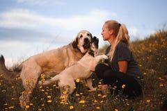 Blond flicka som spelar med den spanska mastiffen f?r valp i ett f?lt av gula blommor arkivfoton