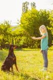 Blond flicka som spelar med hunden eller dobermanen in Arkivfoton