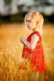 Blond girl in the field with flowers Royalty Free Stock Images
