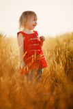 Blond girl in the field Stock Image