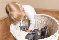 Blond Girl Holding Sphynx Kittens in a Basket Stock Image